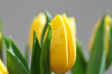 Yellow Tulips Original by vlad-the-impatient