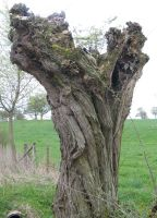 Ancient Twisted Tree by FairyAndTurtleStock