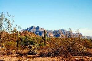 Usery Mountain Regional Park by SuicideBySafetyPin