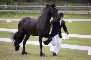 STOCK - Friesian Show 2012-152 by fillyrox