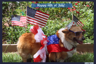 (Petography) 4th of July Corgi by KrazyKari