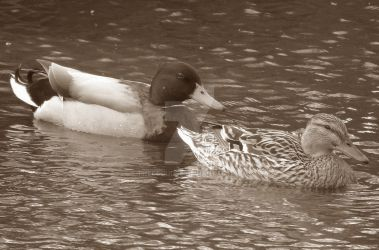 Duke and Duchess. Sepia by THECLOUD96