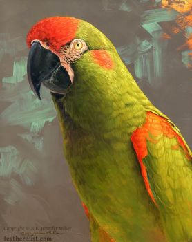 Red-Fronted Macaw by Nambroth