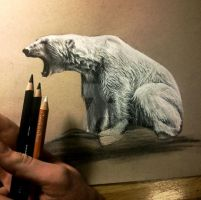 Polar Bear WIP I by aaronbakerart