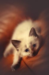 purr by mohdfikree