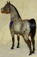 Breyer PAS - Harlequin - Stock 5 of 5 by Lovely-DreamCatcher