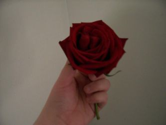 Rose in Hand by kayla2006