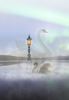 Swan lake by crissouza