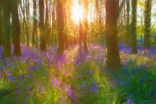 Bluebells and sun rays by daz557