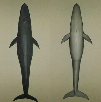 Blue whale from above and below papercraft by minidelirium