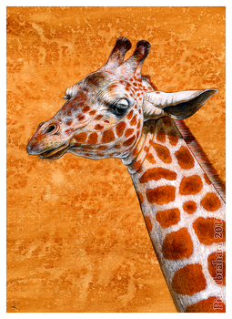 Commission: Reticulated Giraffe by oxpecker