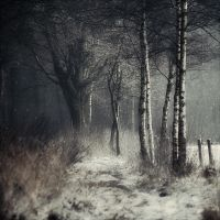 Winter Tale by Oer-Wout