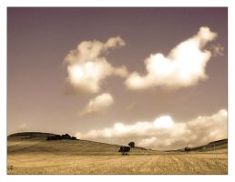 Fields of Gold by pinica