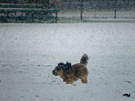 Dog Playing In The Snow by wolfwings1