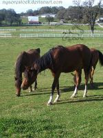 Becker Stables - Yearlings 05 by Nyaorestock