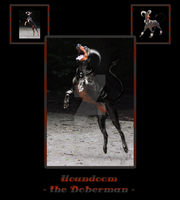 Houndoom, the Doberman