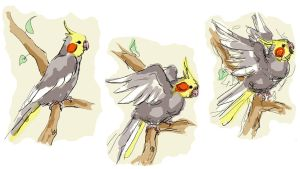 Angry Cockatiel Tryptic by WafflesMcCoy