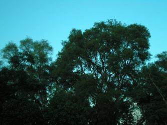 Brilliant Blue and Trees by steward
