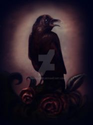 RAVEN OF DARKNESS by MrsGraves