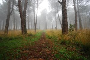 foggy trees stock 13 by chirkhef-stock
