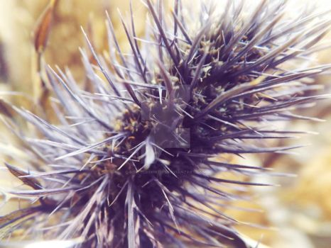 Thistle by gothic88kitties