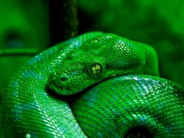 Green Look by ales666