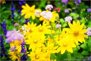 ::yellow.and.purple.flowers:: by Phantom-of-light