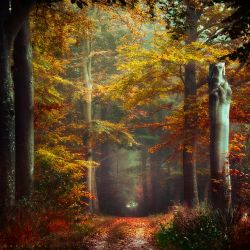Autumn's Embrace by Oer-Wout