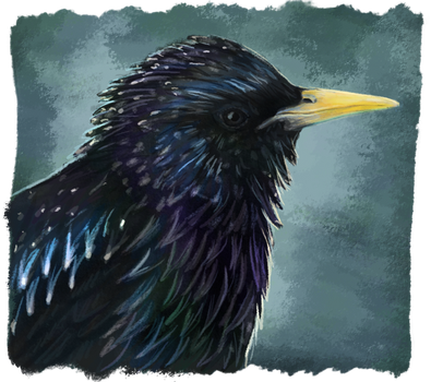 Starling by RiverRaven
