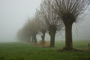Knotted Willows in Misty Land by steppelandstock