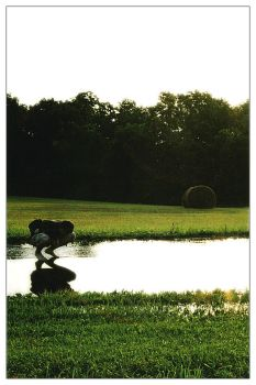Search for the Sun in a Puddle by snarz