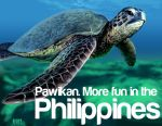 Pawikan by bonify