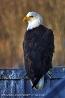 Regal by MSimpsonPhotos