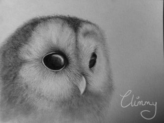 Owl by Climmie