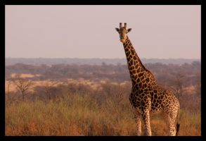 Picture Postcard Africa by Ubhejane