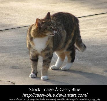 Cat Stock 1 by Cassy-Blue