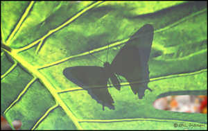 Butterfly on a Leaf by jbjdesigns