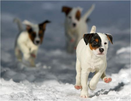 Leader of the pack by TiLa