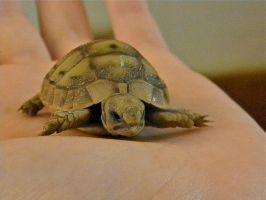 Little Turtle by dafna14495