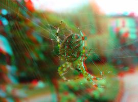 Araneus 2 3D Anaglyph by yellowishhaze