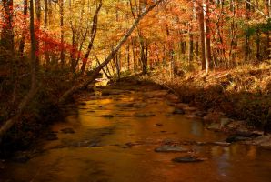 Fall Creek by explicitly