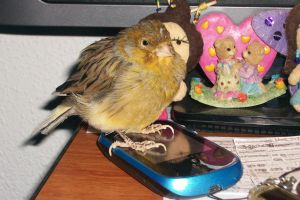Your mobile phone is mine!!! (Pajarito) by butterfly1980