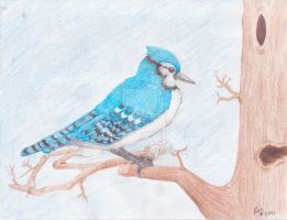 Blue Jay -Finished- by catgir