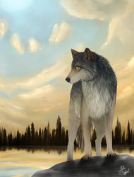 Timber Wolf by HGPainter