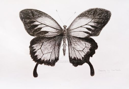 Drawing butterfly 001 by smallkank