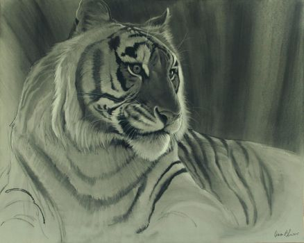 Tiger Portrait Charcoal by ablaise