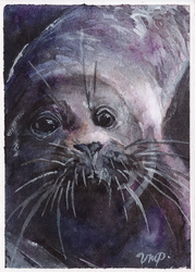 aceo (afa) seal by kailavmp