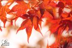 Herbst by PassionAndTheCamera