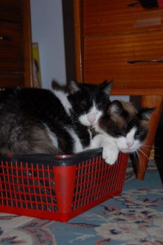 Two cats, one bin by thomasvicens