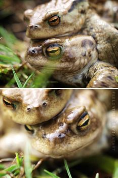 Frogs III by FeelinThis